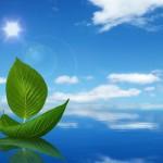 Creative_design_sailing_leaves_under_blue_sky